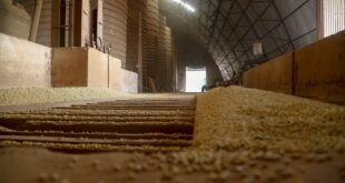 Agricultura: Safra de gros 2020/21 deve chegar a 38 milhes de toneladas no Paran